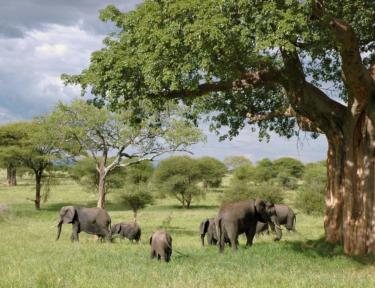 Quelle est la capitale de la Tanzanie ? – Quizz Voyage